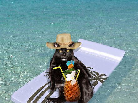 Animals On Beach Vacation Cat On Beach Vacation