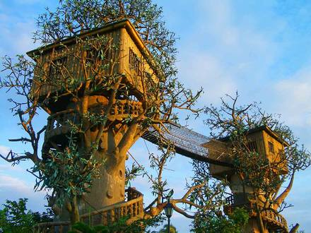 Cool Tree House Amazing Tree Houses